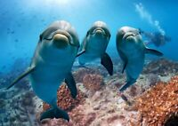 Awesome Happy Dolphins Poster Print Size A4 / A3 Sea Animals Poster Gift #8336