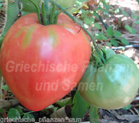 🔥 🍅 BULLS HEART Tomate rot ** alte Tomaten Sorte * 10 Samen