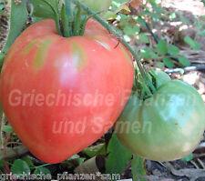 BULLS HEART Tomate rosso tipologia di pomodori antica 10 Semi