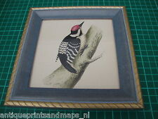 Antique framed bird print Lesser spotted Woodpecker 1860 prent in lijst specht