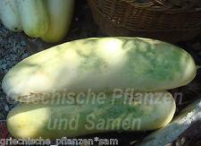 weisse Gurke WHITE WONDER * Rarität *tolle Salat-Gurken 5 frische Samen Balkon