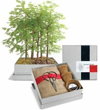 Potting Shed Dawn Redwood Forest Bonsai Box Kit / DIY / Grow Your Plants