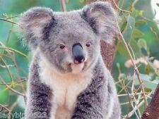 Laptop 15'' 15,4'' Notebook Netbook Skin Sticker Folie Schutz Aufkleber Koala