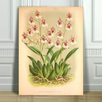 """JEAN LINDEN - Beautiful Pink & White Orchid #36 - CANVAS PRINT POSTER - 36x24"""""""
