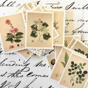 Botanical Vintage Plants Postage Stamp Stickers, Craft, Scrapbooking 45/Pcs