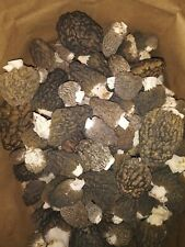 2020 Dried Oregon Morel Mushrooms - 4oz.