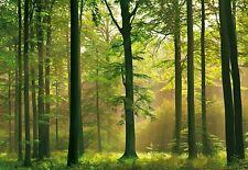 Fototapete AUTUMN FOREST 366x254 Buchenwald Sunday Wald Waldtapete grüne Natur