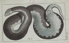 Amphibien Schlangen 10 kolorierte Kupferstiche von B.Siegrist 1800