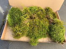 More details for live sphagnum moss fresh picked to order from exmoor 1.5l