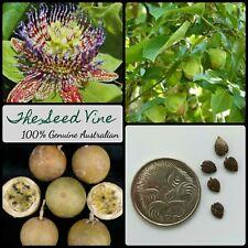 20+  WILD PURPLE PASSIONFRUIT SEEDS (Passiflora maliformis) Vine Edible Flower