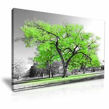 Large Tree Green Leaves Nature Canvas Wall Art Picture Print 76cmx50cm