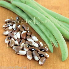 PAINTED PONY  Heirloom Dry shelling Bush & Snap Bean Organic 30+ Beans NON-GMO