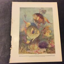 Vintage Book Print - Angel-Fishes