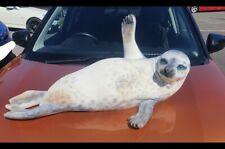 More details for large lifelike seal display seal hard plastic soft fur one of a kind