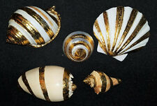 Gold Leaf Natural Sea Shells from Gumps of San Francistco SET OF 5 New