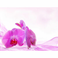 Pink Orchid Pretty Flowers Large Canvas Wall Art Print