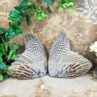 w151b Taxidermy Oddities 2 Pheasant wings crafts smudging fly tying haberdasher