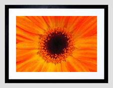 Nature Framed Decorative Posters
