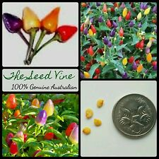 10+ BOLIVIAN RAINBOW CHILLI SEEDS (Capsicum annum) Edible Ornamental Spicy Fun