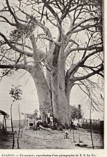 LOANGO BAOBAB CONGO GABON IMAGE 1908 OLD PRINT