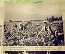 1962 Carte & Image Bulgarie Sofia,Varna = Staline, culture de roses art print