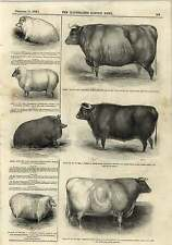 1843 Clod Crusher Roller Liquid Manure Cart Prize Animals Engraving