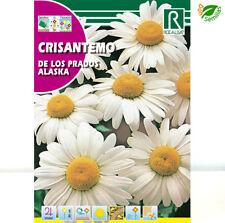 Crisantemo de Los Prados de Alaska Blanco (3 gr / 2400 semillas) seeds Margarita