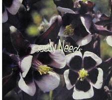 AQUILEGIA (Columbine)-Magpie *BEAUTIFUL*  25 Seeds
