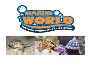 5 Hermit Crabs, 5 Nassarius Snails, 5 Turbo Snails Marine Cuc