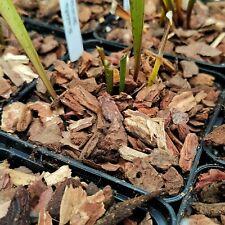 (1,20 €/l) 2,5 Liter Pinienrinde 7/15 mm Karnivoren Orchideen Sarracenia