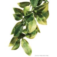 Exo Terra Plastic Plant - Amapallo, Mandarin, Croton - lizards, snakes, vivarium