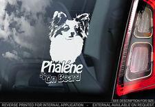 Phalène - Car Window Sticker - Phalene Papillion Dog on Board Sign - V01