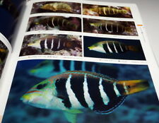 A Photographic Guide to WRASSES of Japan book Japanese Labridae fish #0943