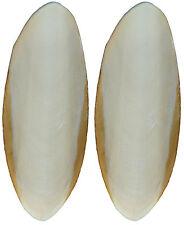 X2 Cuttle Fish Bones Para Tortugas Tortugas aves TERRAPINS Reptil calcio de hueso