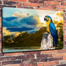 """Fantastico Ara blu & giallo pappagallo stampa foto su tela A1.30""""x20""""30mm di profondità"""