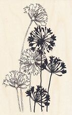 AGAPANTHUS CLUSTER  P107  STAMPENDOUS RUBBER STAMP  w/m  Free Shipping   NEW