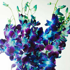 Fresh Flowers Dendrobium Orchids Bom Dyed Blue