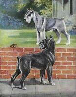 Schnauzer - Vintage Color Dog Print - MATTED