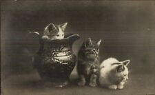 Kittens Kitty Cats & Water Pitcher c1910 Real Photo Postcard