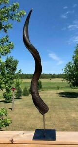 """Oiled Kudu Horn on Metal Stand African Antelope Outer Horn Size: About 30"""""""