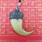 Tiger Nail Lep Tiger Resin plus Rope LP Sawai Holy Magic Thai Amulet Necklace