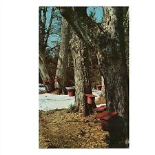 Vintage c1970s Chrome Postcard: Old Wooden Sap Buckets In a Vermont Sugarbush