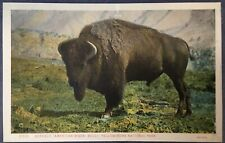 Yellowstone National Park YNP American Bison Bull Buffalo Postcard
