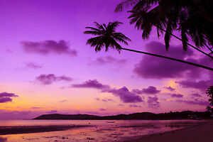 MASSIVE  photo landscape art  beach  A0 CANVAS PRINT TROPICAL PALM ocean sunset