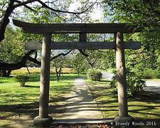 Japan Tokyo Torii gate temple shinto shrine photography art print - Brandy Woods