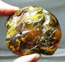 Large 56 gram piece of Baltic amber - partially polished fossil