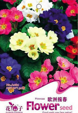 FD1219 Colorful Primrose Flower Seed Primula Malacoides 1 Pack 50 Seed Free Ship