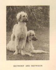 """* Afghan Hound """"P"""" - 1931 Vintage Dog Print - Matted"""