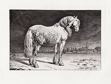 "Mysterious Paulus POTTER 1800s Etching ""Frisian Horse"" DURAND FRAMED Signed COA"