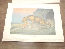TIERE DER URWELT Bolsche 3 dinosauro MESONICE mesonyx